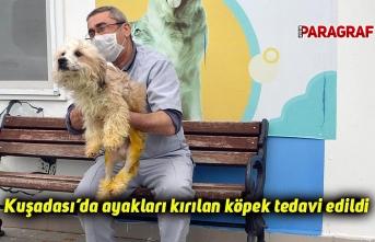 Kuşadası'da ayakları kırılan köpek tedavi edildi