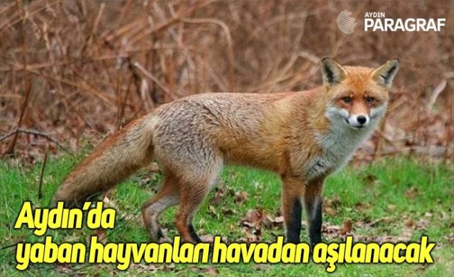 Aydın'da yaban hayvanları havadan aşılanacak