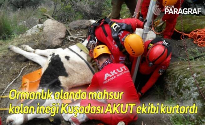 Ormanlık alanda mahsur kalan ineği Kuşadası AKUT ekibi kurtardı