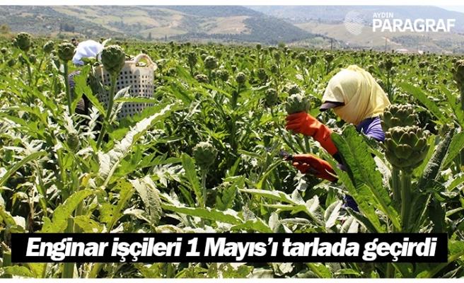 Aydın'da enginar işçileri 1 Mayıs'ı tarlada geçirdi