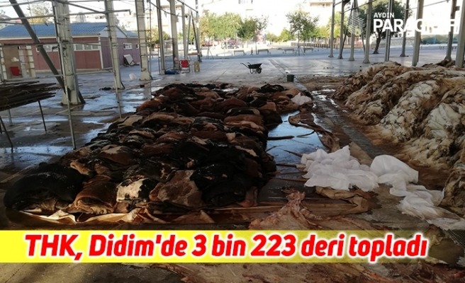 THK, Didim'de 3 bin 223 deri topladı