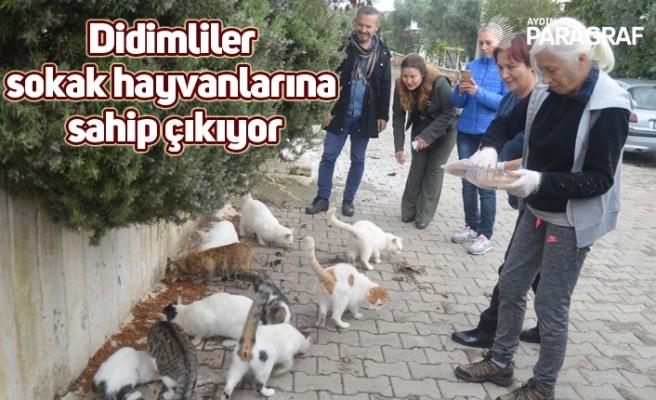 Didimliler sokak hayvanlarına sahip çıkıyor