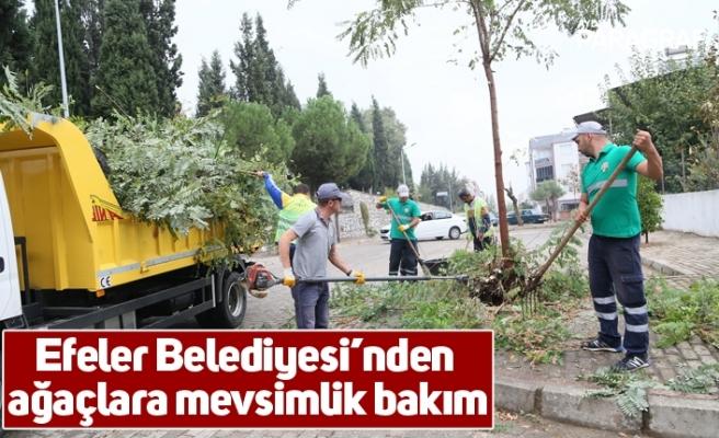 Efeler Belediyesi'nden ağaçlara mevsimlik bakım
