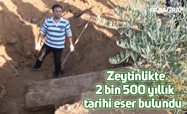 Zeytinlikte 2 bin 500 yıllık tarihi eser bulundu