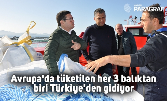 Avrupa'da tüketilen her 3 balıktan biri Türkiye'den gidiyor