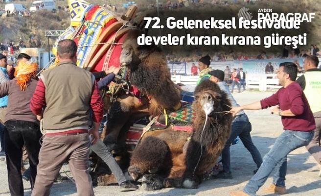 72. Geleneksel festivalde develer kıran kırana güreşti