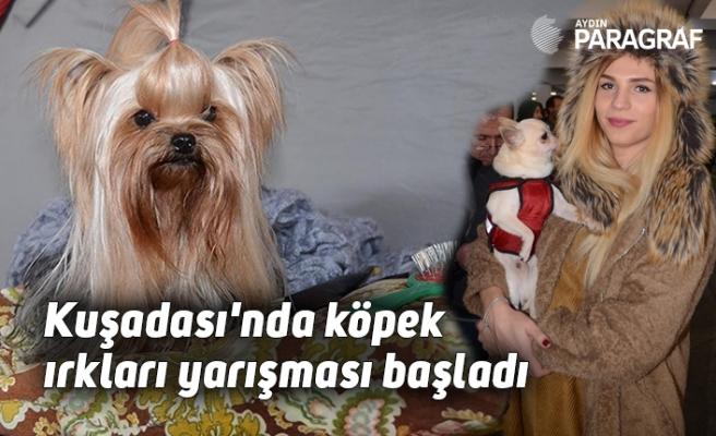 Kuşadası'nda köpek ırkları yarışması başladı