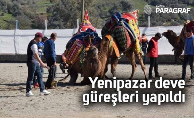 Yenipazar deve güreşleri yapıldı