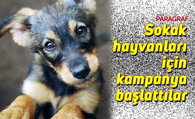 Sokak hayvanları için kampanya başlattılar
