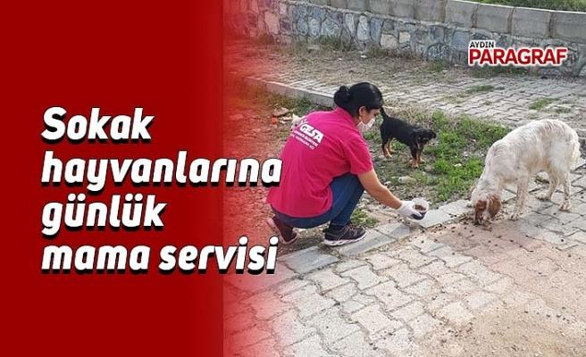 Sokak hayvanlarına günlük mama servisi