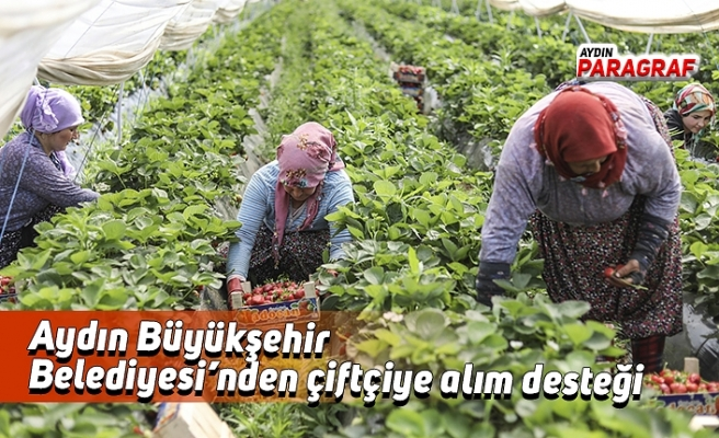Aydın Büyükşehir Belediyesi'nden çiftçiye alım desteği