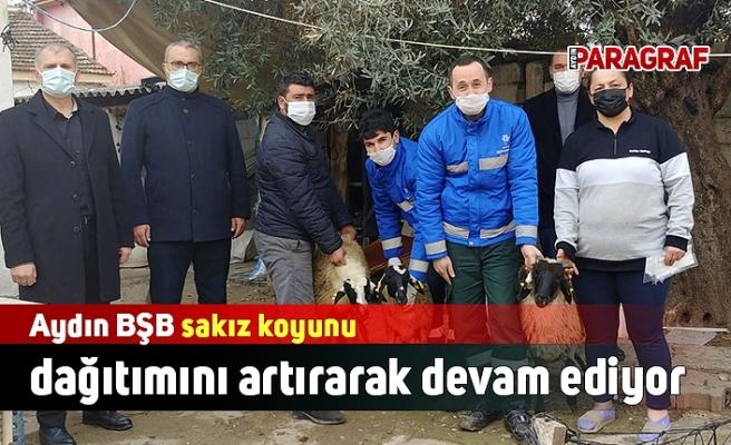 Aydın BŞB sakız koyunu dağıtımını artırarak devam ediyor