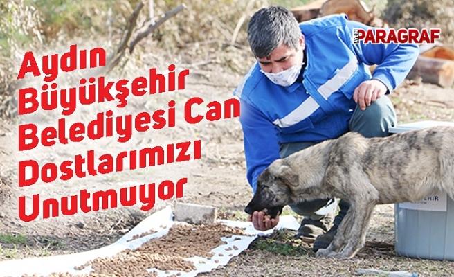 Aydın Büyükşehir Belediyesi Can Dostlarımızı Unutmuyor