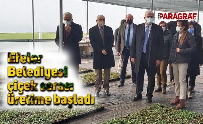 Efeler Belediyesi çiçek serası üretime başladı