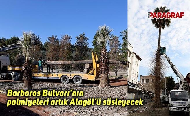 Barbaros Bulvarı'nın palmiyeleri artık Alagöl'ü süsleyecek