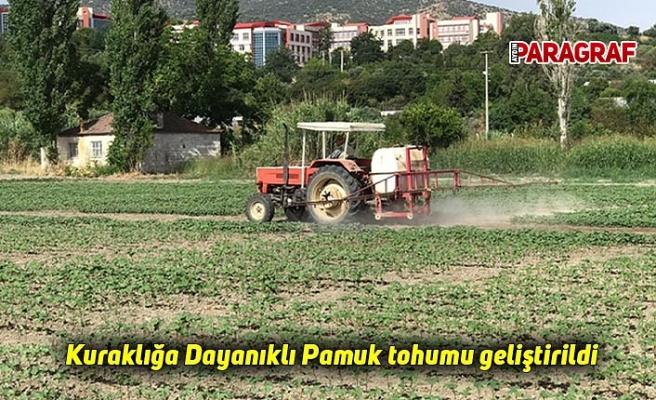 Kuraklığa Dayanıklı Pamuk tohumu geliştirildi