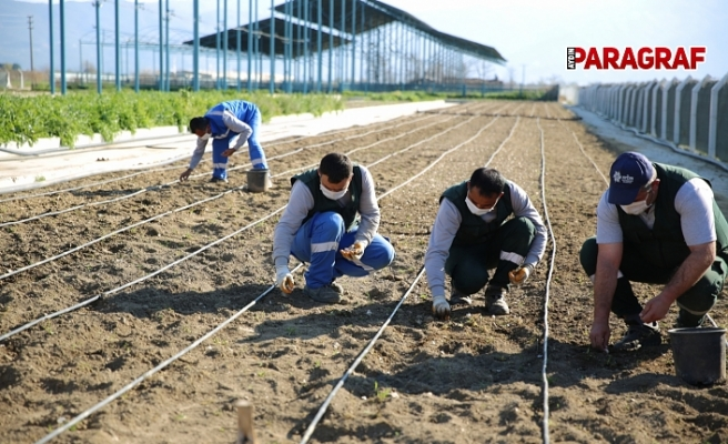 Taşköprü Sarımsağı 'Aydın Çiftçi Merkezi'nde Hayat Buluyor