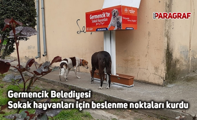 Germencik Belediyesi Sokak hayvanları için beslenme noktaları kurdu
