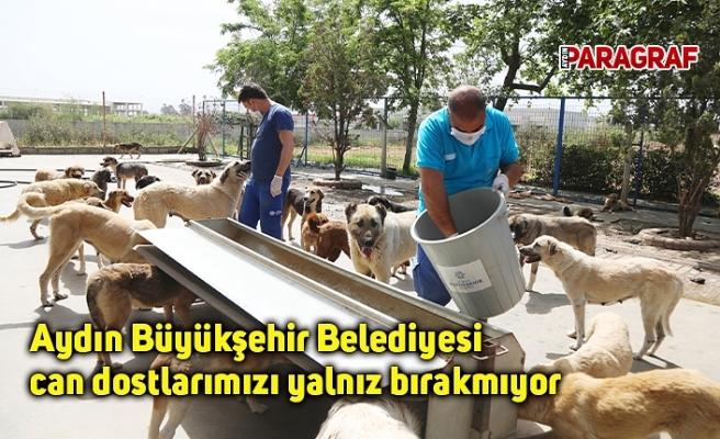 Aydın Büyükşehir Belediyesi can dostlarımızı yalnız bırakmıyor
