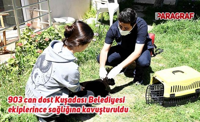903 can dost Kuşadası Belediyesi ekiplerince sağlığına kavuşturuldu