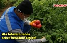 Ata tohumlarından sebze hasadına başladı