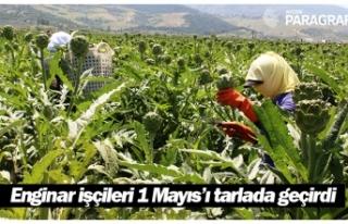Aydın'da enginar işçileri 1 Mayıs'ı tarlada...