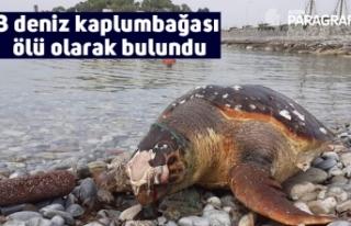 3 deniz kaplumbağası ölü olarak bulundu
