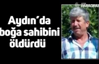 Aydın'da boğa sahibini öldürdü