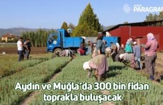 Aydın ve Muğla'da 300 bin fidan toprakla buluşacak
