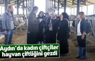 Aydın'da kadın çiftçiler hayvan çiftliğini...
