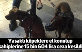 Yasaklı köpeklere el konulup sahiplerine 15 bin...