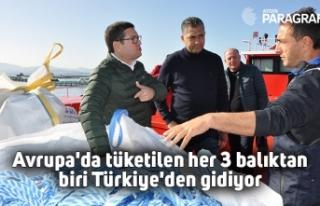 Avrupa'da tüketilen her 3 balıktan biri Türkiye'den...