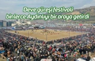 Deve güreşi festivali binlerce Aydınlıyı bir...