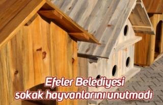 Efeler Belediyesi sokak hayvanlarını unutmadı
