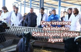 Genç veteriner hekimlerden Sakız koyunu çiftliğine...
