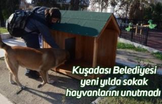 Kuşadası Belediyesi yeni yılda sokak hayvanlarını...
