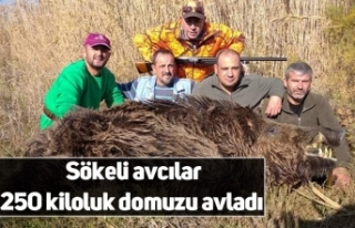 Sökeli avcılar 250 kiloluk domuzu avladı