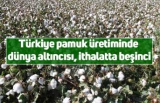 Türkiye pamuk üretiminde dünya altıncısı, ithalatta...