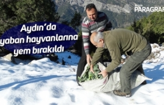 Aydın'da yaban hayvanlarına yem bırakıldı