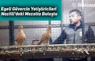Egeli Güvercin Yetiştiricileri Nazilli'deki...