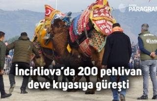 İncirliova'da 200 pehlivan deve kıyasıya güreşti