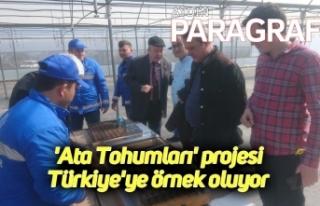 'Ata Tohumları' projesi Türkiye'ye...