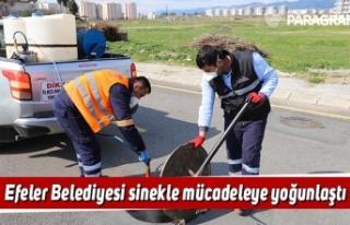 Efeler Belediyesi sinekle mücadeleye yoğunlaştı