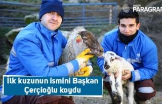 İlk kuzunun ismini Başkan Çerçioğlu koydu