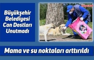 Büyükşehir Belediyesi Can Dostları Unutmadı