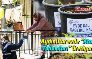 """Aydınlılar evde """"Ata Tohumları"""" üretiyor"""