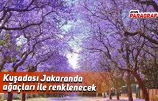 Kuşadası Jakaranda ağaçları ile renklenecek