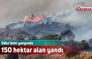 Söke'deki yangında 150 hektar alan yandı