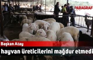 Başkan Atay hayvan üreticilerini mağdur etmedi