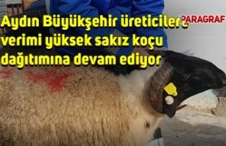 Aydın Büyükşehir üreticilere verimi yüksek sakız...